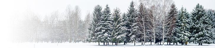 bandeau hiver 2019